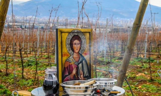 mitrovica-vinogradari-izlazu-proizvode