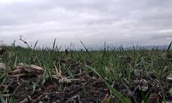produzen-rok-za-poljoprivredne-subvencije